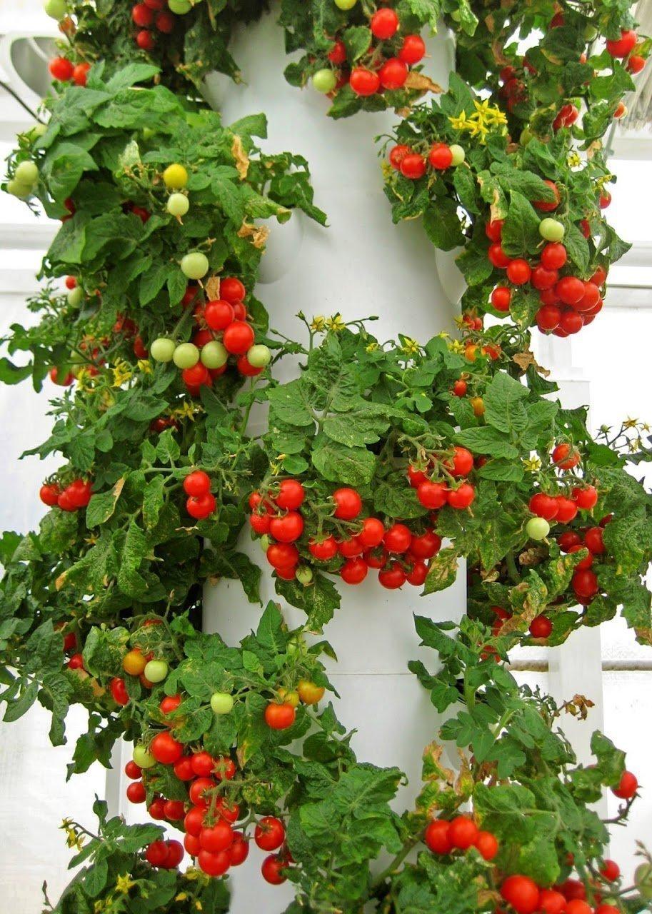 Aeroponic Fruits Tower Garden Fruits