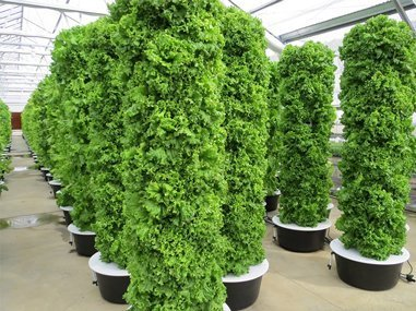 Nature Crisp Greenhouse