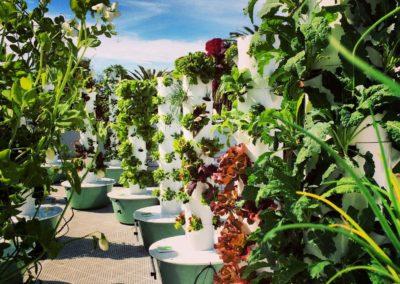 LA Urban Farms, Los Angeles