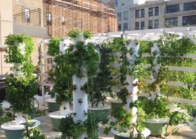 Gallow Green Restaurant Rooftop Farm, Manhattan