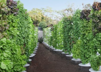 Kona Greens, Kailua Kona, Hawaii