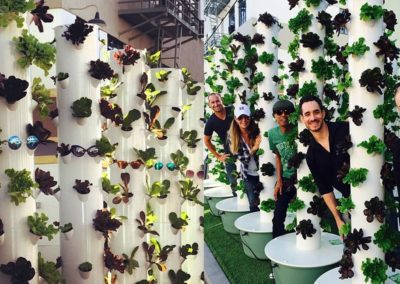 LA Urban Farms For Food & Bounty, Sunset Grower Studios