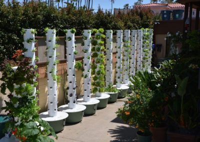 SoCal Urban Farms