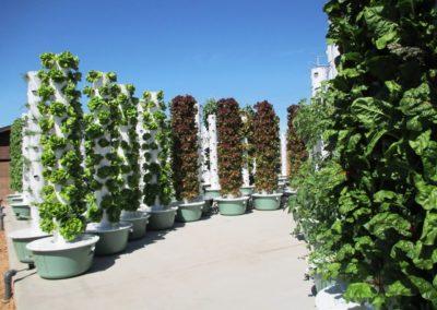 True Garden Outdoor Farm, AZ