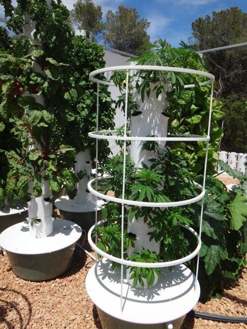 Tower Garden Marijuana Tower Garden Cannabis Aeroponics