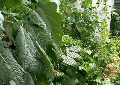 tower-garden-farm-aeroponics-barcelona-spain