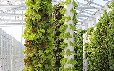 Aeroponic Farms & Tower Farms