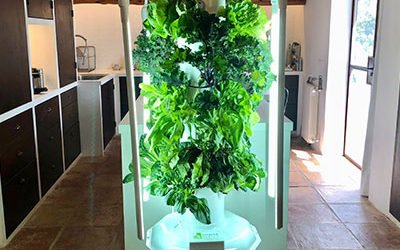 Growing crops on a Tower Garden Indoors