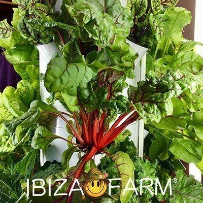 Waarom is het 't beste een Tower Farm en/of een Tower Garden via de website van Ibiza Farm te bestellen?