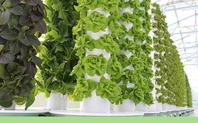 Tower Farm & Tower Garden technology at the International Green Week in Berlin (IGW)