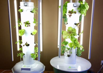 europe-tower-garden-aeroponic