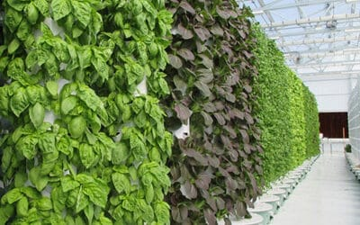 Examples of Aeroponic Tower Farms