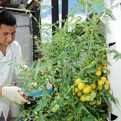 Tower Garden in Mexico, Central America, and South America