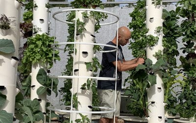 Aeroponics tube? Aeroponics column? Aeroponic tower? Which one is the Tower Garden?
