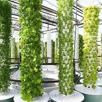 What is the difference between a regular aeroponic Tower Garden and the microgreens (baby greens) Tower Garden?