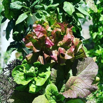 Leafy greens & herbs are guaranteed to sell out when grown in a Tower Farm