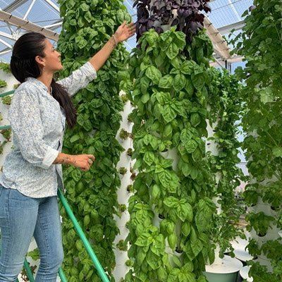 How to grow basil on a Tower Garden