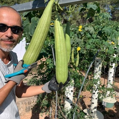 Growing Loofah Sponges on a Tower Garden