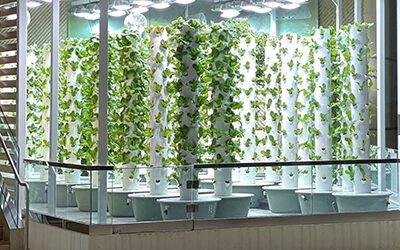 Urban Smart Farms food donation program in Florida