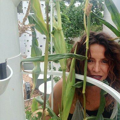 Cultiver du maïs sur un Tower Garden
