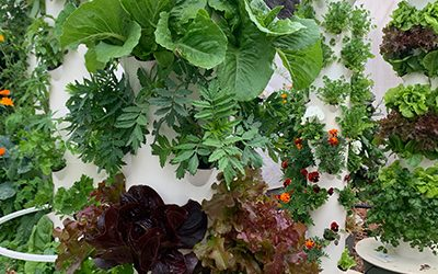 Is Tower Garden a Hydroponic Tower?