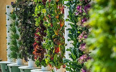Investment Comparison Between Tower Farms versus Conventional Hydroponics